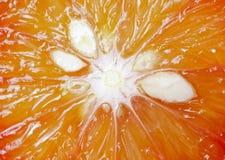 μακρο πορτοκάλι Στοκ Εικόνες