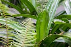 Μακρο πράσινος βγάζει φύλλα το υπόβαθρο, τροπικό υπόβαθρο, νησί του Μπαλί, Ινδονησία Στοκ φωτογραφίες με δικαίωμα ελεύθερης χρήσης