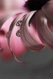 Μακρο πτώση σε ένα ροζ daizy Στοκ φωτογραφία με δικαίωμα ελεύθερης χρήσης