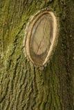 Μακρο πυροβολισμός σύστασης κορμών δέντρων Στοκ Φωτογραφία
