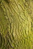 Μακρο πυροβολισμός σύστασης κορμών δέντρων Στοκ εικόνα με δικαίωμα ελεύθερης χρήσης