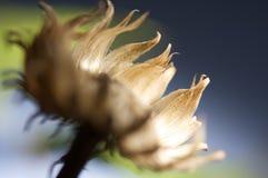 Ξηρά μακροεντολή λουλουδιών Στοκ Φωτογραφία
