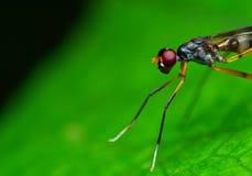 Μακρο πυροβολισμός ενός hornet στοκ φωτογραφίες με δικαίωμα ελεύθερης χρήσης