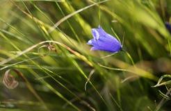 Μακρο πυροβολισμός του κουδούνι-λουλουδιού Στοκ φωτογραφία με δικαίωμα ελεύθερης χρήσης