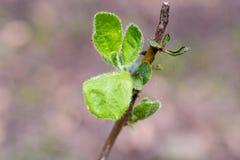 Μακρο πλάνο ενός πράσινου φύλλου Στοκ φωτογραφίες με δικαίωμα ελεύθερης χρήσης