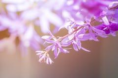 Μακρο στενά επάνω ιώδη λουλούδια φωτογραφιών στο φυσικό υπόβαθρο στοκ εικόνες