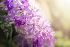 Μακρο στενά επάνω ιώδη λουλούδια φωτογραφιών στο φυσικό υπόβαθρο στοκ εικόνα με δικαίωμα ελεύθερης χρήσης