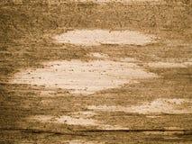 Μακρο σύσταση - δάσος - σιτάρι Στοκ φωτογραφία με δικαίωμα ελεύθερης χρήσης