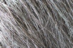 Μακρο σύσταση μαύρα άγρια yak Altaic μαλλιού Στοκ Φωτογραφίες