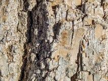 Μακρο σύσταση του φλοιού δέντρων στον ήλιο Στοκ Φωτογραφία