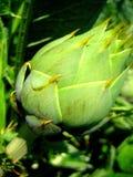 Μακρο τυπωμένες ύλες Καλών Τεχνών υποβάθρου και ταπετσαριών cardunculus Cynara στοκ εικόνες