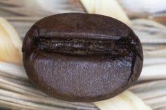 Μακρο φασόλια καφέ που τηγανίζονται σε ένα μπεζ υπόβαθρο στοκ εικόνα