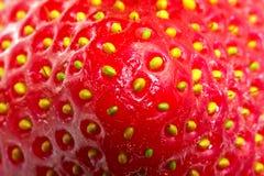 μακρο φράουλα Στοκ Φωτογραφίες