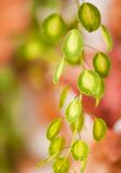 μακρο φυτό Στοκ φωτογραφία με δικαίωμα ελεύθερης χρήσης