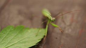 Μακρο φωτογραφία ενός εντόμου στη φύση φιλμ μικρού μήκους