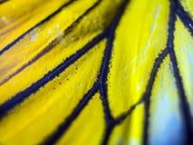 Μακρο φωτογραφία ενός φτερού πεταλούδων στοκ φωτογραφίες