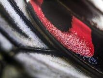 Μακρο φωτογραφία ενός φτερού πεταλούδων στοκ εικόνα