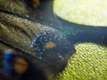 Μακρο φωτογραφία ενός φτερού πεταλούδων στοκ εικόνες με δικαίωμα ελεύθερης χρήσης