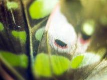 Μακρο φωτογραφία ενός φτερού πεταλούδων στοκ εικόνες