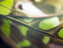 Μακρο φωτογραφία ενός φτερού πεταλούδων στοκ φωτογραφία με δικαίωμα ελεύθερης χρήσης