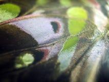 Μακρο φωτογραφία ενός φτερού πεταλούδων στοκ εικόνα με δικαίωμα ελεύθερης χρήσης