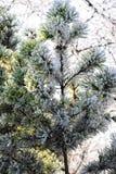 Μακρο φωτογραφία καλυμμένα φύλλα παγετού Στοκ Εικόνα