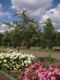 Μακρο φωτογραφία με ένα διακοσμητικό τοπίο κήπων σύστασης υποβάθρου με τα λουλούδια των hydrangeas και των Μπους τριαντάφυλλων Στοκ φωτογραφία με δικαίωμα ελεύθερης χρήσης