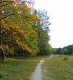 Μακρο φωτογραφία με το τοπίο φθινοπώρου στο δάσος με τα δέντρα κατά μήκος των δασικών πορειών ως πηγή για το σχέδιο, διαφήμιση, τ στοκ εικόνες