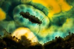 Μακρο φωτογραφία μιας πορτοκαλιάς και πράσινης φέτας βράχου αχατών Στοκ Εικόνες