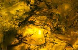 Μακρο φωτογραφία μιας πορτοκαλιάς φέτας βράχου αχατών Στοκ Φωτογραφίες