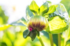 Μακρο φωτογραφία του οφθαλμού λουλουδιών στοκ εικόνες με δικαίωμα ελεύθερης χρήσης