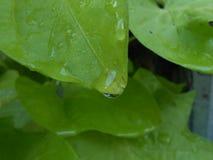 Μακρο φωτογραφία του φύλλου με την πτώση στοκ φωτογραφία με δικαίωμα ελεύθερης χρήσης