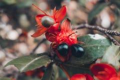 Μακρο φωτογραφία των λουλουδιών στοκ εικόνες