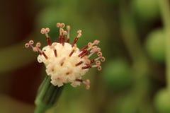 Μακρο φωτογραφίες των λουλουδιών Στοκ εικόνα με δικαίωμα ελεύθερης χρήσης