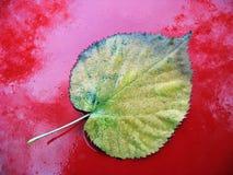 Μακρο φύλλο Στοκ φωτογραφία με δικαίωμα ελεύθερης χρήσης