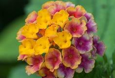 μακρο φύση λουλουδιών σύνθεσης Στοκ Εικόνες