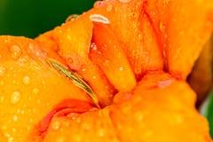 μακρο φύση λουλουδιών σύνθεσης Στοκ Εικόνα