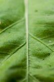 Μακρο φύλλο Στοκ Εικόνα