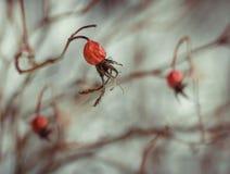 Μακρο χειμώνας λουλουδιών τέχνης ξηρός Στοκ Φωτογραφία