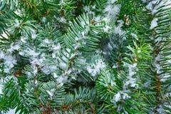 Μακρο χιόνι φύλλων δέντρων έλατου Χριστουγέννων πραγματικό στοκ εικόνες