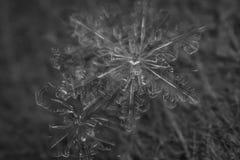 Μακρο snowflake γραπτό Στοκ φωτογραφία με δικαίωμα ελεύθερης χρήσης