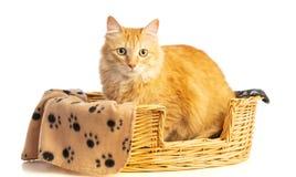 Μακρυμάλλης κόκκινη γάτα σε ένα ψάθινο καλάθι στοκ εικόνα