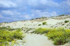 Μακρύς αμμόλοφος Στοκ φωτογραφίες με δικαίωμα ελεύθερης χρήσης