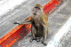 Μακρύς πίθηκος Macaque ουρών Στοκ εικόνες με δικαίωμα ελεύθερης χρήσης