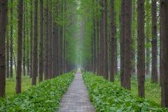 Μακρύς δρόμος ξύλων Στοκ εικόνες με δικαίωμα ελεύθερης χρήσης