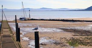 Μακρύς John Seagull στοκ φωτογραφίες με δικαίωμα ελεύθερης χρήσης