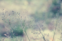 Μακρύ λιβάδι χλόης στοκ φωτογραφίες
