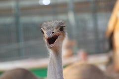 Μακρύ πουλί λαιμών στο ζωολογικό κήπο Στοκ φωτογραφία με δικαίωμα ελεύθερης χρήσης