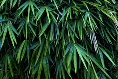 Μακρύ φύλλο στον κήπο Στοκ φωτογραφία με δικαίωμα ελεύθερης χρήσης