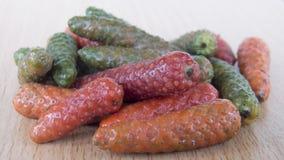 Μακρύ retrofractum Vahl πιπεριών ή αυλητών Στοκ Εικόνα